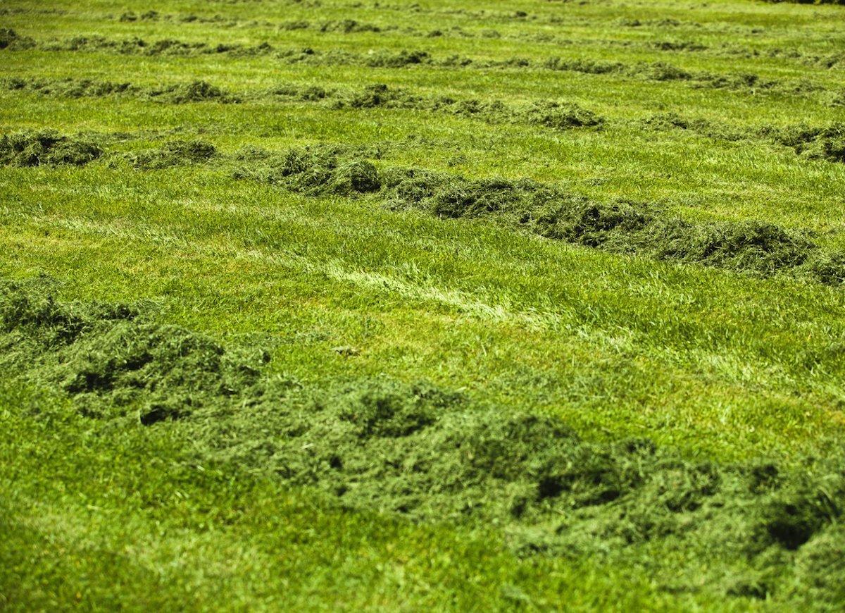 grass-clippings-as-mulch-jpg.jpg